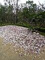 Zhengzhou Garden Expo Park Weihai garden's shell.jpg