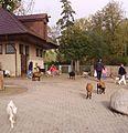 Ziegen im Freizeitpark Trippsdrill - panoramio.jpg