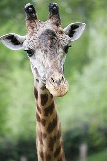Greenville Zoo - Wikipedia