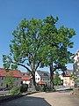 Zwei Dorflinden in Langendorf, 1.jpg