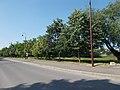 'Veresegyház, Gyermekliget u.' bus stop and lime trees, 2019 Veresegyház.jpg