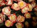 (Swissotel Quito) rosos in color.jpg