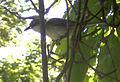 Ärtsångare med insekt i näbben vid Falbygdens museum 6280.jpg