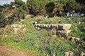 Αρχαία Λιμναία, δυτική πλευρά. - panoramio - Spiros Baracos (2).jpg