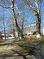 Πλατάνια στα Πλατανάκια - panoramio.jpg