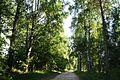 Берёзовая аллея - panoramio.jpg