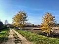 Буйволівці, осінній пейзаж.jpg