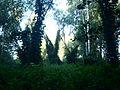 Заросший лес.jpg