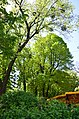 Золотоворітський сквер - пам'ятка природи. Фото 5.jpg