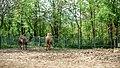 Зоопарк-Ловеч - panoramio (4).jpg