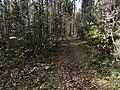Лесные дорожки к Акуловскому 2.jpg