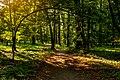 Літні алеї в парку.jpg