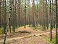 Насыпь узкоколейки - panoramio.jpg