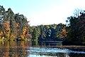 Осінь в Пущі.jpg