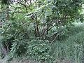 Парк шума Гази Баба во мај (170).JPG
