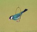 Птичка в кольце. 1819.jpg