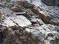 Скалолазка в Триградското ждрело.jpg