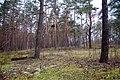 Сосновый бор Слобожанский парк.jpg
