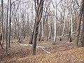 Украина, Киев - Голосеевский лес 254.JPG