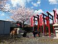 お稲荷さんと桜をバックに記念撮影 - panoramio.jpg