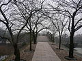 冬天的鼋头渚 - panoramio.jpg