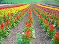夏の縞模様(Floral design) - panoramio.jpg