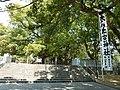 大麻比古神社の御神木- ooasahiko shrain holry tree - panoramio.jpg