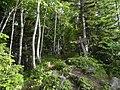 天宝山の頂上(Mt.Tenpo) - panoramio.jpg