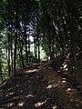 小北岭登山道 - Xiaobeiing Mountain Trail - 2014.07 - panoramio.jpg