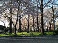東本願寺前 - panoramio (1).jpg