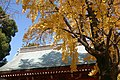 葛飾八幡宮 - panoramio (6).jpg