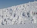 蔵王の樹氷(2013.1.21) - panoramio.jpg