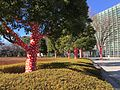 赤と白の水玉模様 2017 (32564723295).jpg