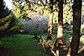 阿里山高山植物園 Alishan Alpine Botanical Garden - panoramio.jpg
