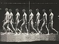 "-Man Walking, ""Stroboscopic"" Photograph- MET DP300555.jpg"