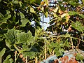 0169jfSabang Chapels Caingin Pantubig San Rafael Plants Bulacanfvf 36.JPG