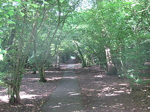 Dollis Valley Greenwalk - Image: 02DVG BIG WOOD