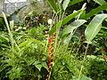 04454jfPulilan Resort Bulacan Plants Welcome Havenfvf 41.JPG