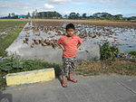 09410jfRoads Paddy fields Domesticated ducks Bahay Pare Candaba Pampangafvf 01.JPG