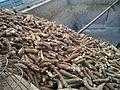 1-Tapioca root-Maravalli.jpg