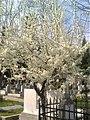 10. Bucuresti, Romania. Cimitirul Bellu Catolic. Zi de primavara in Cimitir, martie 2017. (2).jpg