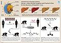 15 Hegasy Nobel Prize 2020 HepC.jpg