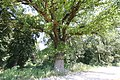 18817 Myszecin park.JPG