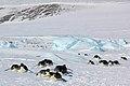 2007 Snow-Hill-Island Luyten-De-Hauwere-Emperor-Penguin-96.jpg