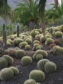 Awesome Cactus Garden