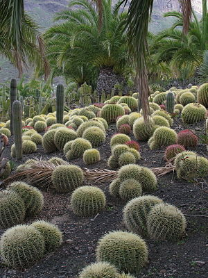 Cactus garden - Cactus garden in La Aldea de San Nicolás, Gran Canaria.