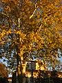 2011-10-26-173549 49,414835, 8,666121.JPG - panoramio.jpg