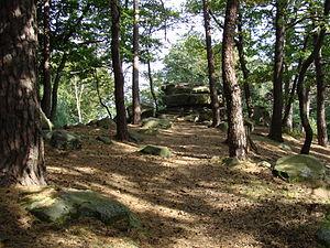 Hohe Loog (Haardt) - Image: 2012 Pfälzerwald 472 Hohe Loog Gipfel