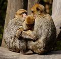 2016-04-21 13-59-18 montagne-des-singes.jpg