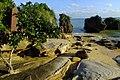 2017-01-26 Wasurena-ishi,Haemita,Iriomote 西表島忘勿石 DSCF0484.jpg
